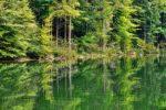 竹沼貯水池(群馬県)のバス釣りポイント【オカッパリにオススメ】