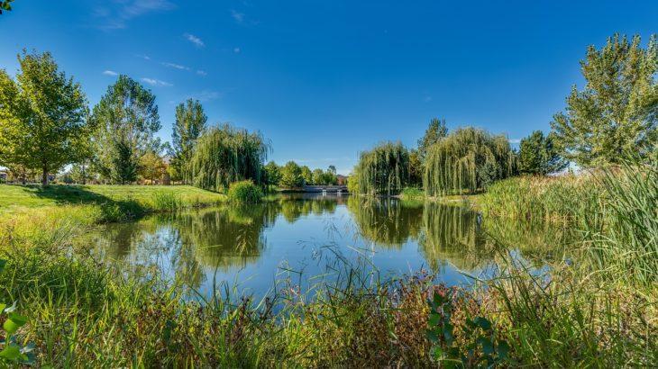 愛知県のバス釣りできる野池【オカッパリにオススメ】