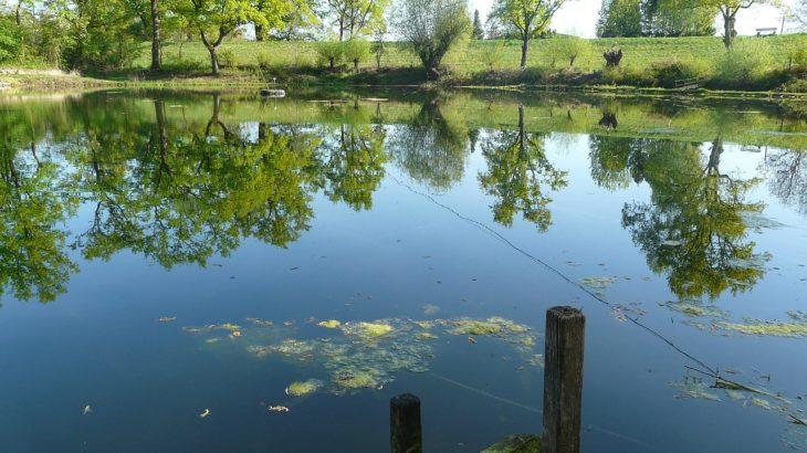愛知県/知多半島でバス釣りができる野池【オカッパリにオススメ】