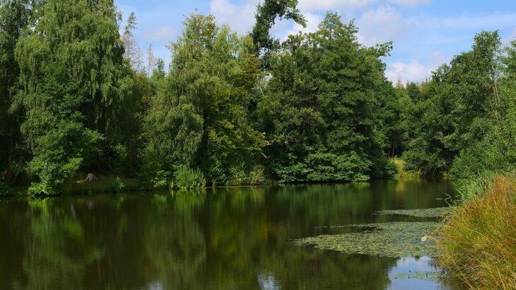 三重県/伊賀市周辺のバス釣りができる野池【オカッパリにオススメ】